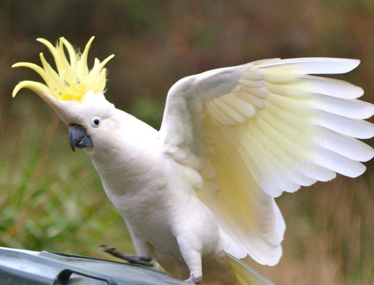 oiseau exotique blanc