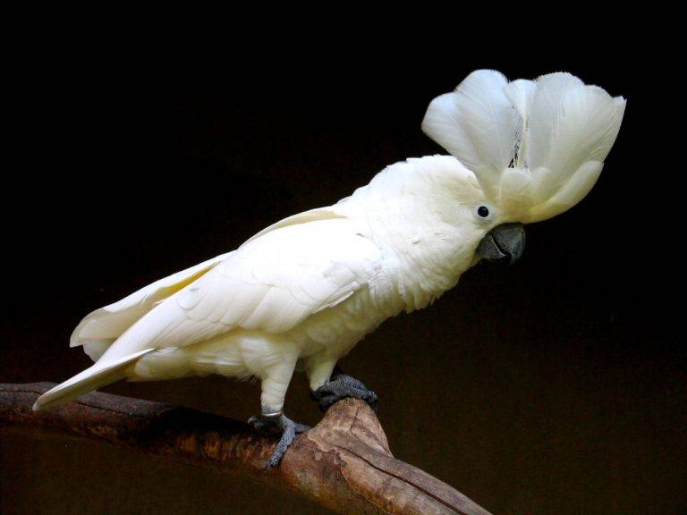 posséder un oiseau blanc