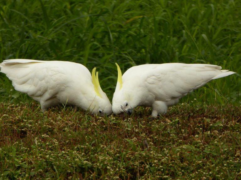 manger des oiseaux