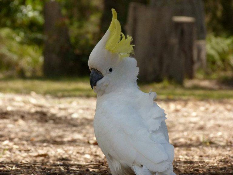 oiseau exotique dans la nature