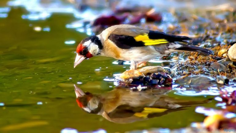 oiseau boire