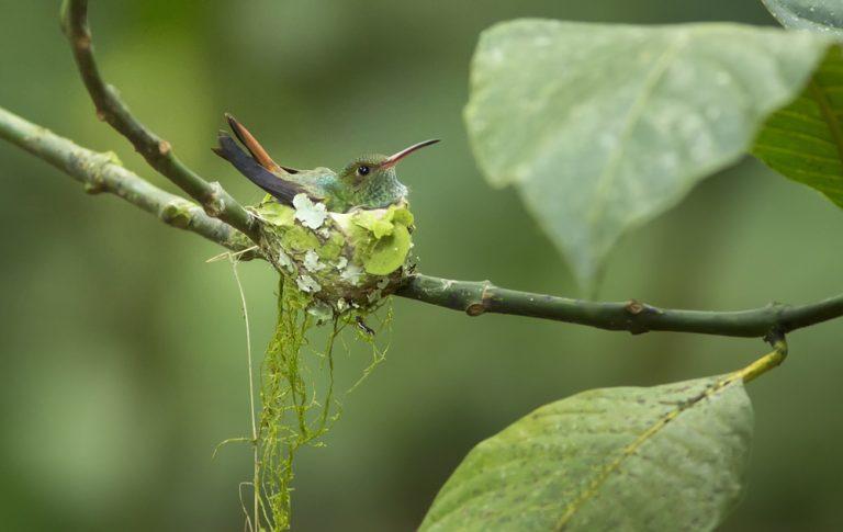 cage d'un colibri
