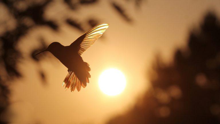 lever du soleil colibri