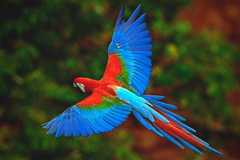 oiseau exotique volant