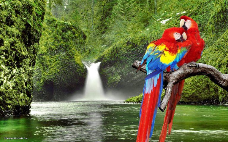 oiseaux avec cascade