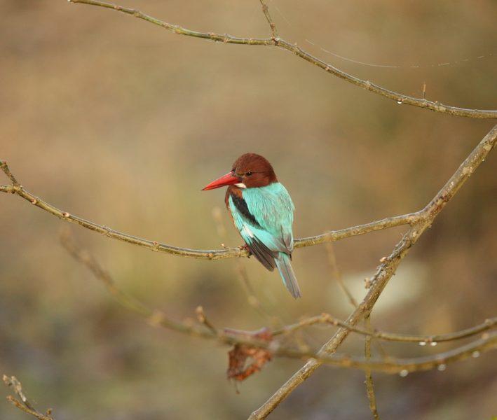curiostité d'oiseau exotique