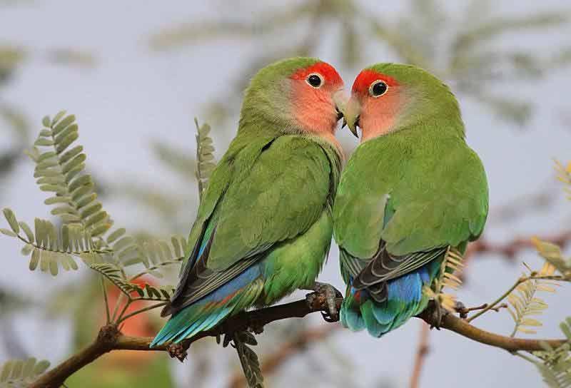 baisers d'oiseaux