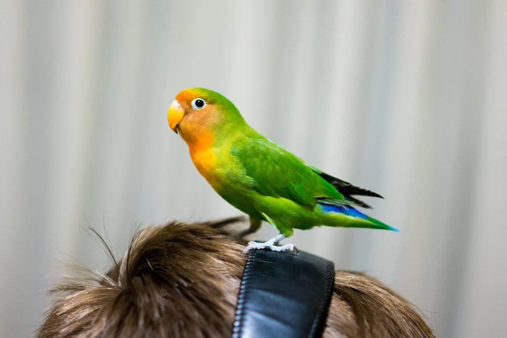 oiseau dans la tête