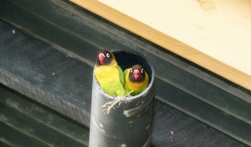 oiseau dans une baignoire