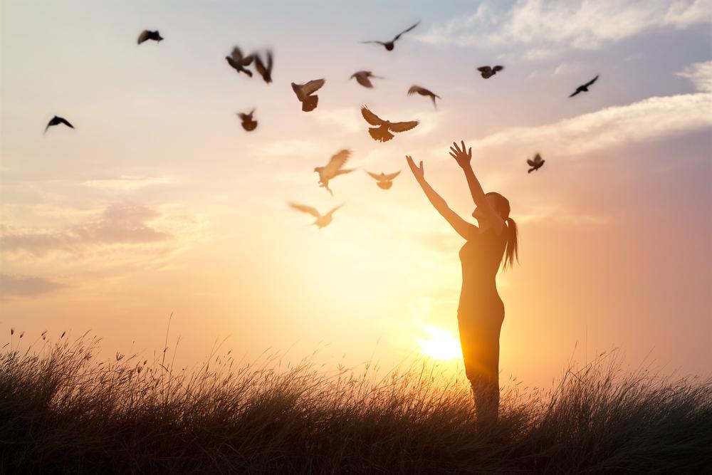 colombe oiseau volant