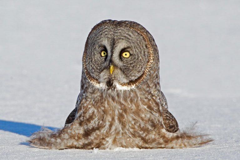 oiseau exotique dans la neige
