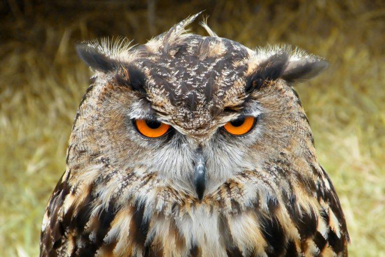 oiseau vous regarde