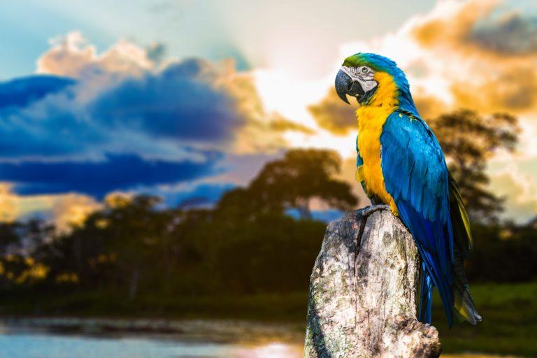 perroquet posant