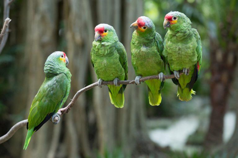 quatre oiseaux