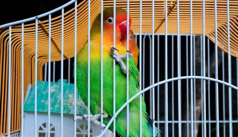 cage d'un oiseau