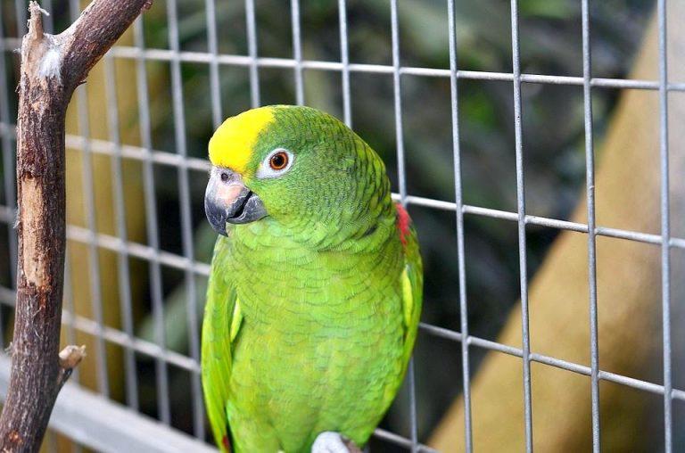 oiseau naturel