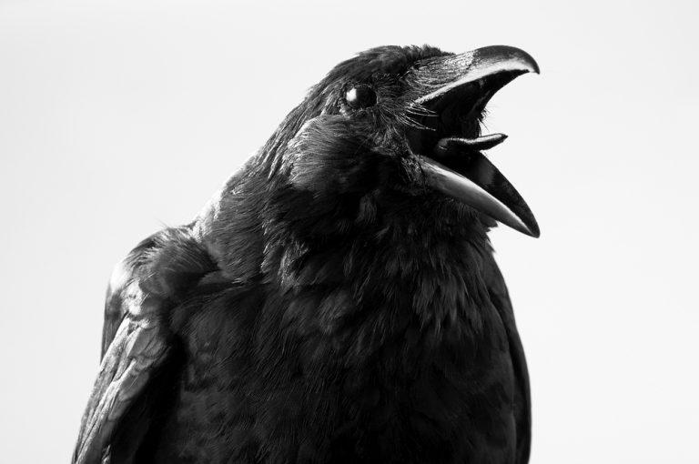 Tu connais le corbeau