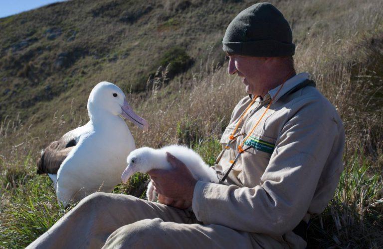 humains et albatros