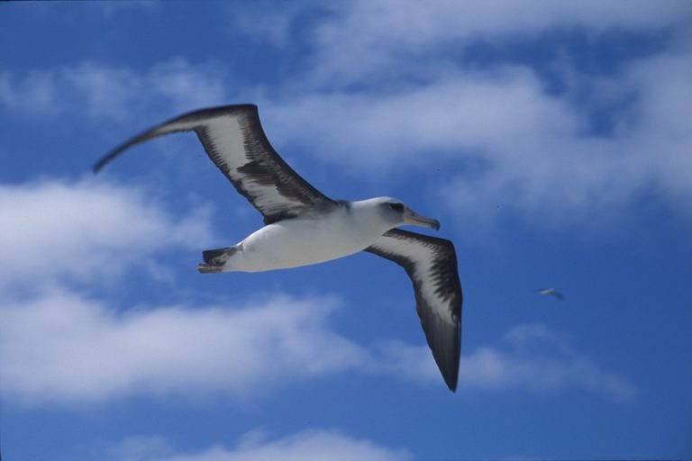 albatros d'oiseaux exotiques