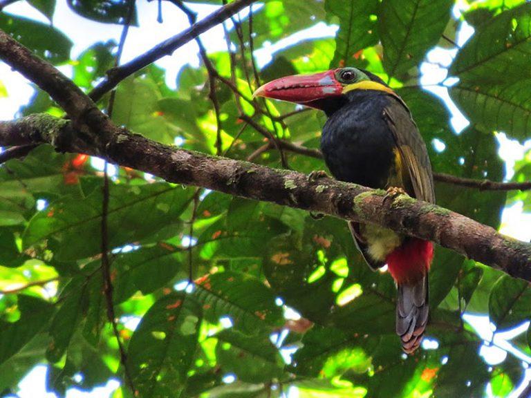 oiseau exotique