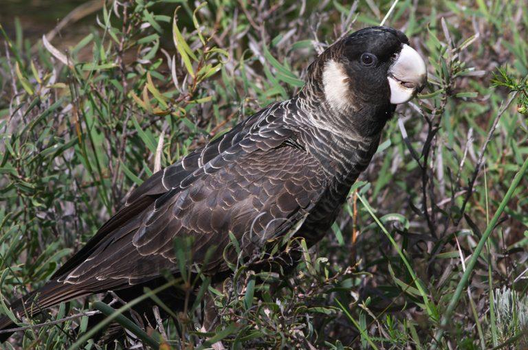 oiseau exotique de carnaby