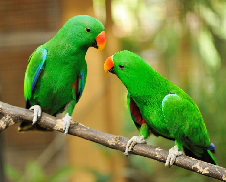 perroquets à la recherche